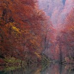 Kamačnička jesen