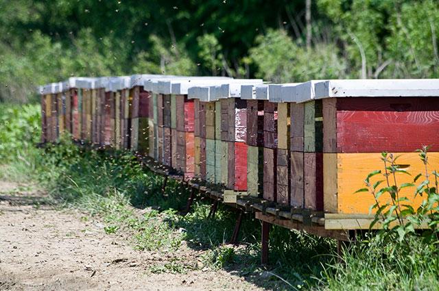 Ukoliko si preblizu, slijedi ubod pčele