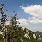 Drvo ponosno i nakon života