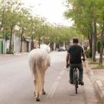 Istrčavanje konja